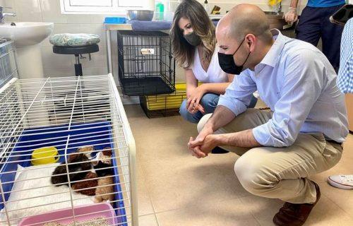 majadahonda-cicam-centro-proteccion-animal-perro-gato