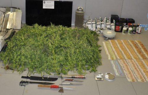 Policia-Mostoles-incauta-marihuana-Sabinas_2348175180_20108496_1300x731